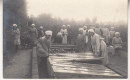 Aalst - Teelt - Vrouwen Aan Het Werk - Fotokaart - 1919 - Aalst
