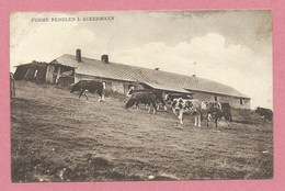 68 - MURBACH - GRAND BALLON - Ferme REDELEN - ROEDELEN - J. ACKERMANN - Troupeau De Vaches - France