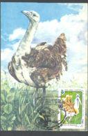 75917- GREAT BUSTARD, BIRDS, MAXIMUM CARD, 1996, ROMANIA - Vögel