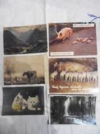 LOT 40 CPM THEME ANIMAUX TOUS LES SCANS DISPONIBLES - Cartes Postales