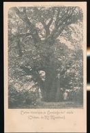 L'ARBRE HISTORIQUE DE LEMBERGE  CHATEAU DE Mr.MAENHOUT - Merelbeke