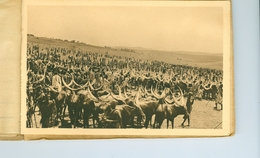 "9 CP Ruanda Urundi ""Bétail"" Vaches Sacrées... Ed. Jos Dardenne 1 Carnet Sér. 2 B. Vers 1930 Ethnographie Rwanda Burundi - Ruanda-Urundi"