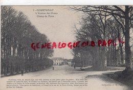45- COURTENAY -L' AVENUE DES ORMES  CHAMP DE FOIRE  - LOIRET - Courtenay