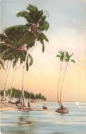 CPA  Panama Slim Palms Against A Tropic Sky  E118 - Panama