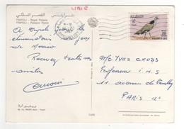 """Timbre , Stamp """" Oiseau (coin Inférieur Abimé)   """" Sur Cp , Carte , Postcard  Du 12/10/1967 ( Pli D'angle Sur La Carte ) - Libye"""