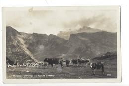 21431 -  Morgins Pâturage Au Pas De Chésery Vaches - VS Valais