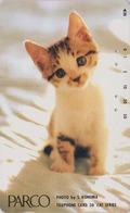 Télécarte Japon / 110-50809 - ANIMAL - CHAT ** PARCO ** - CAT Japan Phonecard - KATZE - 4976 - Gatos