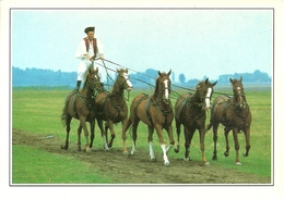 Puszta (Hungary, Ungheria) Horses In The Steppes, Cavalli Nella Steppa - Ungheria