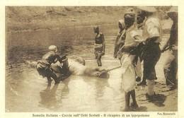 """2513 """" SOMALIA ITALIANA-CACCIA SULL'UEBI SCEBELI-IL RICUPERO DI UN'IPPOPOTAMO"""" CARTOLINA ORIGINALE NON SPEDITA - Somalië"""