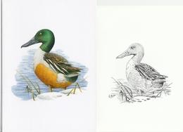 69. BUZIN. CANARD SOUCHET - 1985-.. Oiseaux (Buzin)