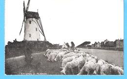 Paysage De Flandre-+/-1910-Moulin à Vent-Molen-Windmühle-Moutons-Schapen-Schaapherder-Damme??? - België