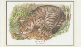 Postcard - Wild Cat (Felis Sylvestris)  -  Unused  Very Good - Cartes Postales