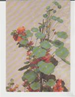 Postcard - Art - Henri Fantin-Latour - Nasturtiums 1880 London  Unused  Very Good - Cartes Postales
