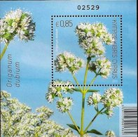 CHYPRE - ORIGAN ( Origanum Dubium) - Nuovi