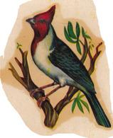 AVE BIRD ARGENTINA ESPECIE A IDENTIFICAR-STICKER PEGATINA VINTAGE CIRCA 1950s - BLEUP - Vignettes Autocollantes