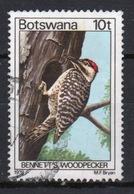 Botswana 1978 Single 10t Definitive Stamp From The Birds Set. - Botswana (1966-...)