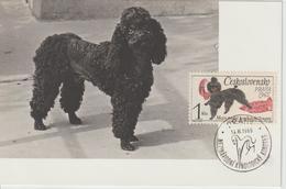 Tchécoslovaquie Carte Maximum 1965 Chien 1411 - Cartas