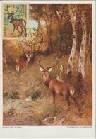 Tchécoslovaquie Carte Maximum Animaux 1966 Cerf 1524 - Cartas