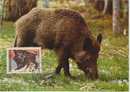 Tchécoslovaquie Carte Maximum Animaux 1966 Sanglier 1529 - Cartas