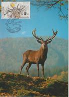 Tchécoslovaquie Carte Maximum Animaux 1983 Cerf 2535 - Cartas