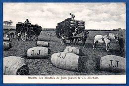 Récolte Des Menthes De John Jakson  - Abimée - Irlande