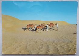 FEZZAN - Carovana - Caravan - Camels LYBIA -  Vg - Libia
