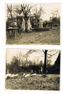 OLLY Occupation Allemande 2 Photos 11.5 Cm Sur 8.5 Cm Lire Texte - Sedan