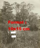 Reproduction D'une Photographie Ancienne D'une Jeune Femme Nue Marchant Dans Une Rivière En Forêt En 1906 - Reproductions