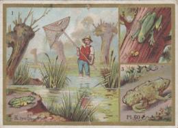 Chromos - Lot De 2 Chromos - Amphibiens Chocolat Guyenne / Enfant Saut Cerceau Sablier (Bon Marché) - Altri