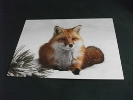 VOLPE 1° PIANO - Tierwelt & Fauna