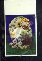 OMAN STATE 1994 FAUNA NATURE SCENES SERIES WILD ANIMALS  OUNCE LEOPARDO DELLE NEVI MNH - Oman