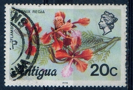 Antigua 1976 - Albero Di Fuoco Flamboyant - Vegetazione