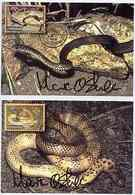 Papua New Guinea 2006 Dangerous Snakes, The Set Of 6 Maxi-cards Each Bearing The Appropriate Stamp Cancelled W... - Papouasie-Nouvelle-Guinée