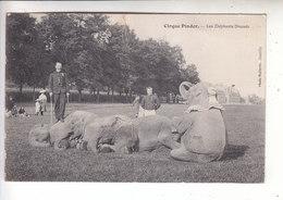 Sp- Cirque PINDER - Les Elephants Dresses - - Zirkus
