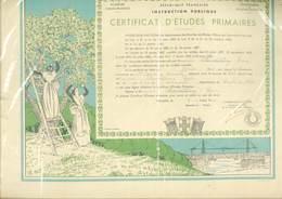 Certificat D' Etudes Primaires - Bouches Du Rhone - Illustration De Léo Lelée (Coeillette Des Olives  (GF 93) - Diplômes & Bulletins Scolaires