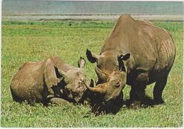 Rhinocéros - Cpm / Vue. - Rhinocéros