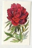 SB05592 Köllnflockenwerke Elmshorn - Im Reich Der Blumen - Serie 16 Bild 53 Pfingstrose - Chromos