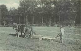 2 CPA Labours Cheval De Trait Laboureur Labourage Paysan Agriculture + Boeufs Bovins Jods Série 114 No 205 Non Situées - Attelages