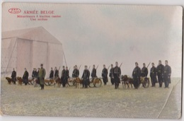 MILITARIA    ARMEE BELGE   Mitrailleuses à Traction Canine (2 Cartes) - Equipment