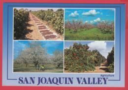 SAN JOAQUIN VALLEY , California- Photo Arnold Compolongo ** 2 SCANS - Etats-Unis