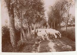 Grimbergen - Kudde Schapen En Herder - Foto Formaat 7.5 X 11 Cm - Lieux