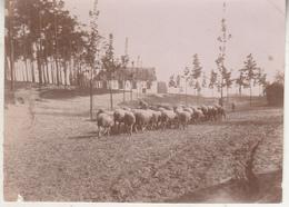 Overmeire Zandberg - Foto Formaat 8 X 11 Cm - Luoghi