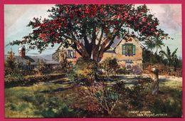Jamaica - Great House - Vale Royal - RAPHAEL TUCK - OILETTE - Jamaïque