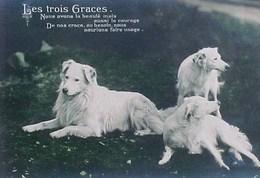Cpa Chien  LES TROIS GRACES  Beaux Chiens Des Pyrenées , 1911  FRANCE PYRENEAN 3 DOGS EAS PHOTO PC - Chiens