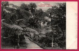 Jamaica - Jamaique - Giant Ferns - Castleton Gardens - Edit. S. DUPERLY - Jamaïque