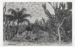 (RECTO / VERSO) MONTE CARLO EN 1903 - N° 782 - LES JARDINS - BEAU TIMBRE DE MONACO - CPA VOYAGEE - Monte-Carlo