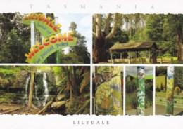 Lilydale Multiview, Northern Tasmania - Unused - Other