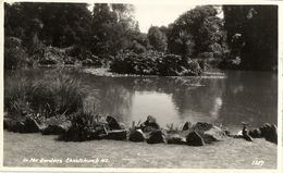 New Zealand, CHRISTCHURCH, In The Gardens (1950s) RPPC - New Zealand