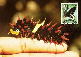 Papua New Guinea, Queen Alexandra's Birdwing Larva Butterfly Postcard (1988) - Papua New Guinea