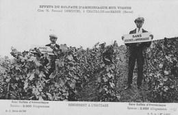 CHATILLON Sur MARNE  Effets Sulfates Ammoniaque Vignes M. F. Descotes - France